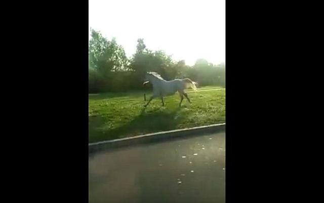konj_bulevar