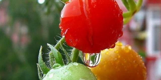 zdravlje-zdrava-hrana-organska-organski