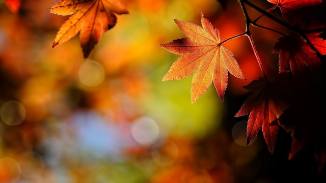 6872907-fall-wallpaper