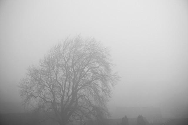 4374802-foggy