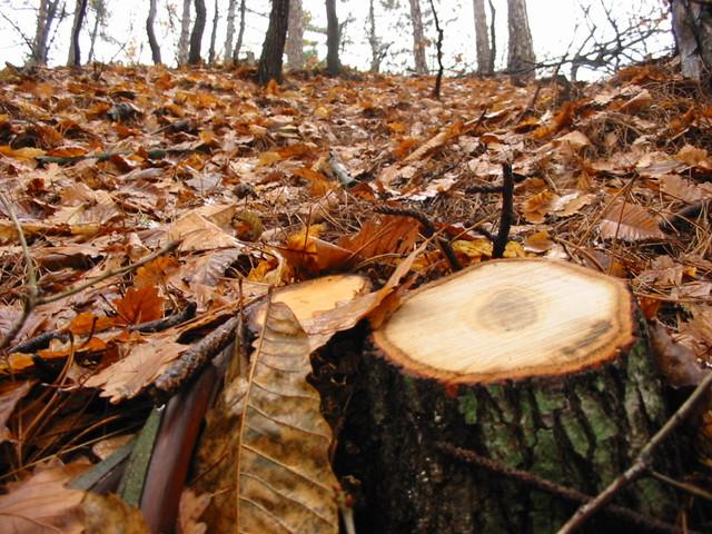 tree-trunk-1453003-640x480