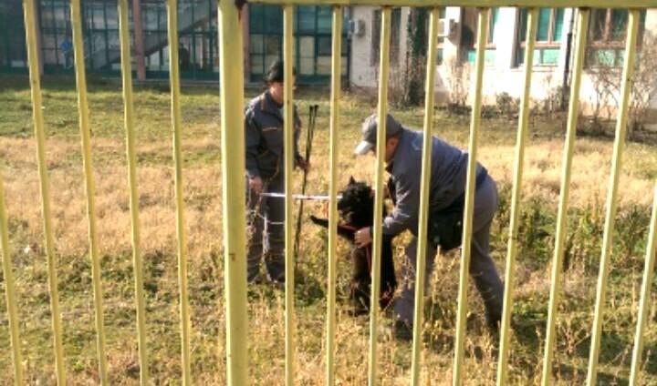 Prizor koji je šokirao Novosađane: Brutalni obračun Zoohigijeničara sa psom