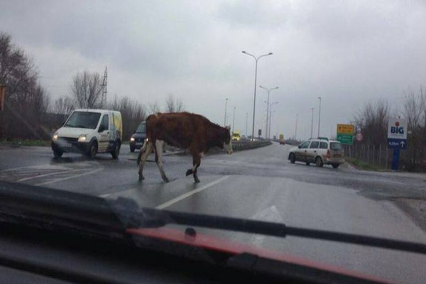 uzivo sa novosadskih ulica