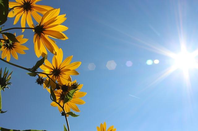 flowers-977061_640