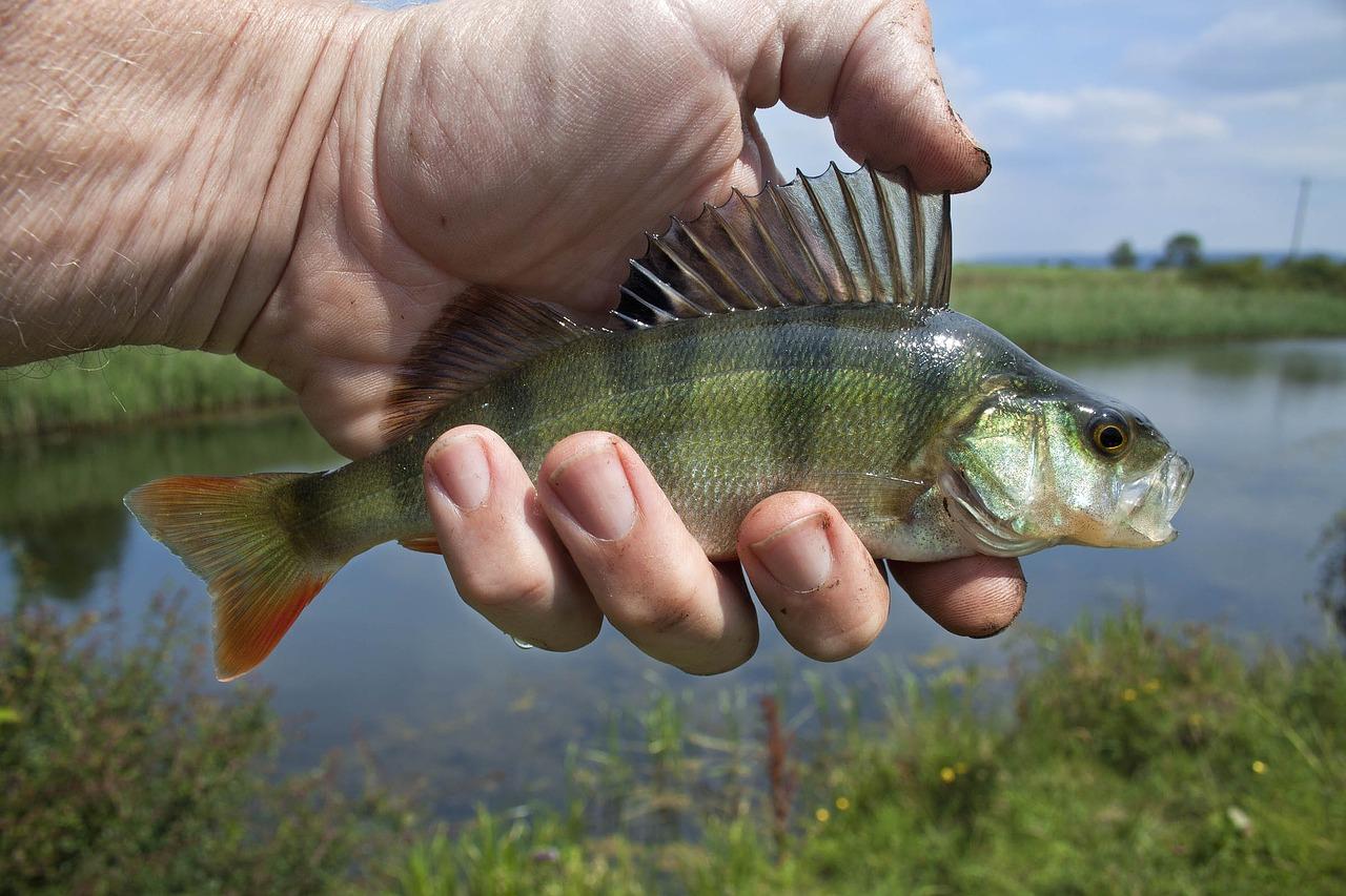 river-fish-1164953_1280