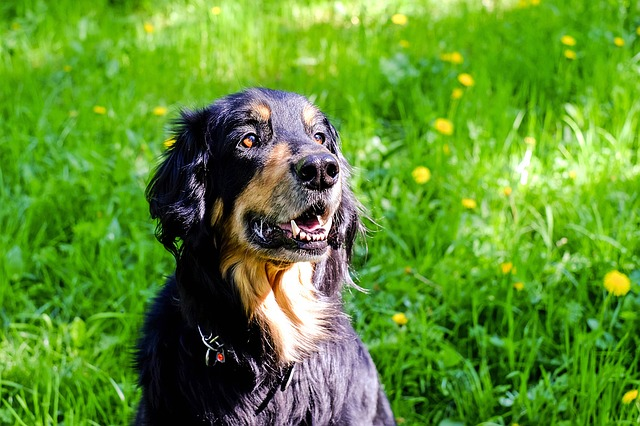 dog-1342202_640