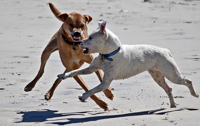 dogs-1345211_640