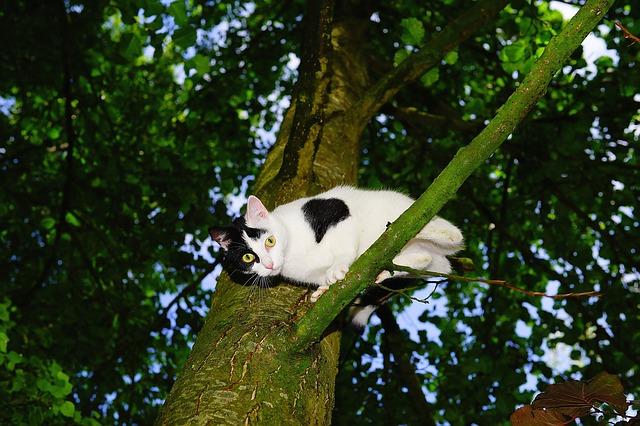 cat-1494918_640
