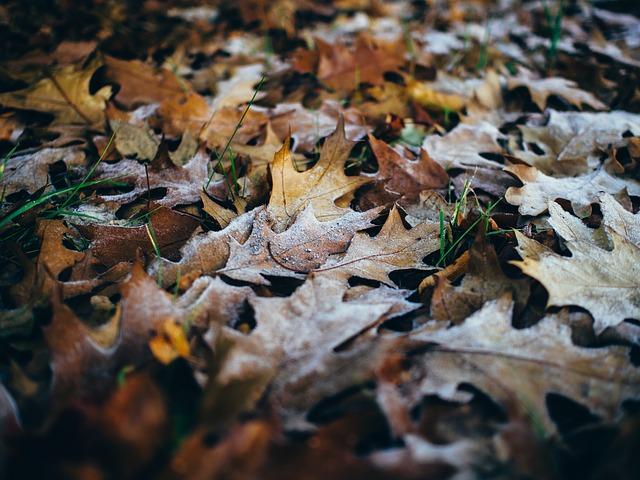 leaves-933040_640